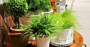 Комнатные растения: фото