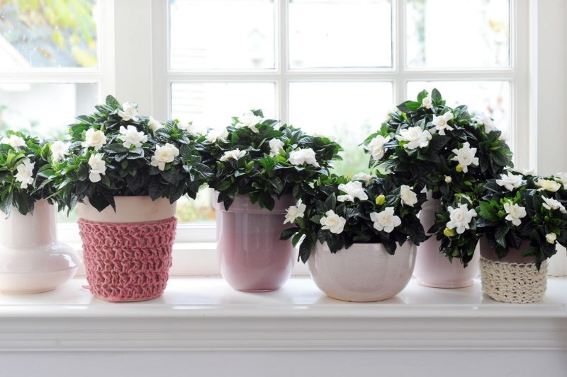 Полка для цветов: композиции на подоконнике