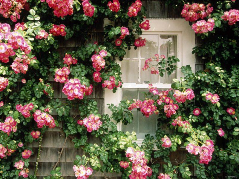 Дача: цветы над окном