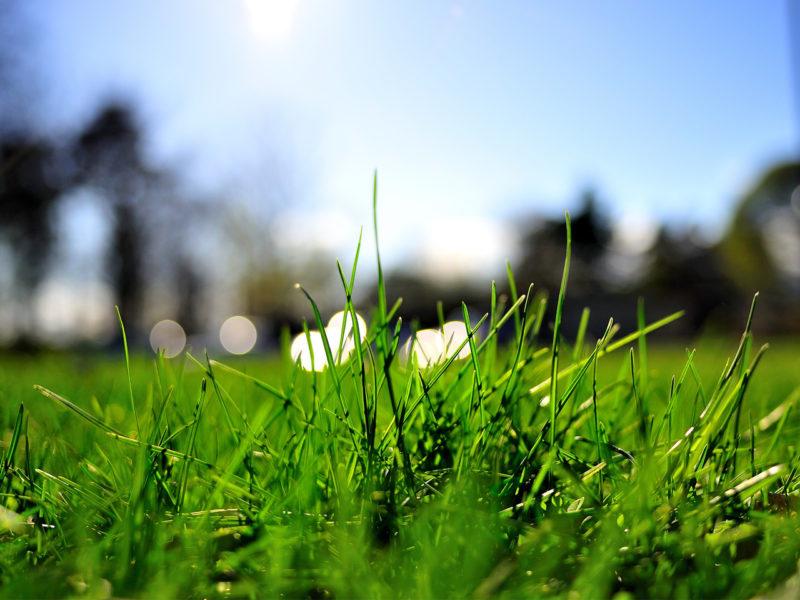 Как посеить газонную траву